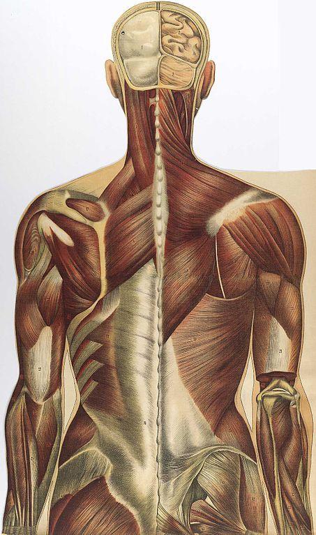 упражнения для снятия боли при шейно