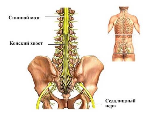 Боль в позвоночнике конский хвост