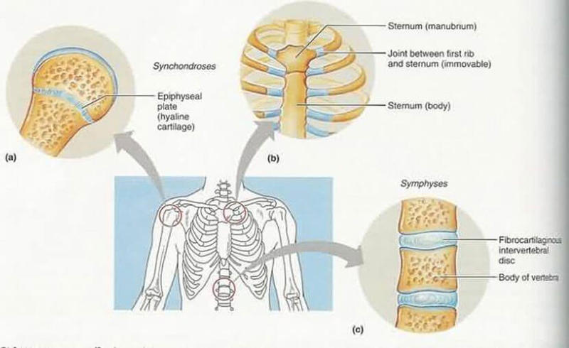 капустный лист лечебные свойства для суставов