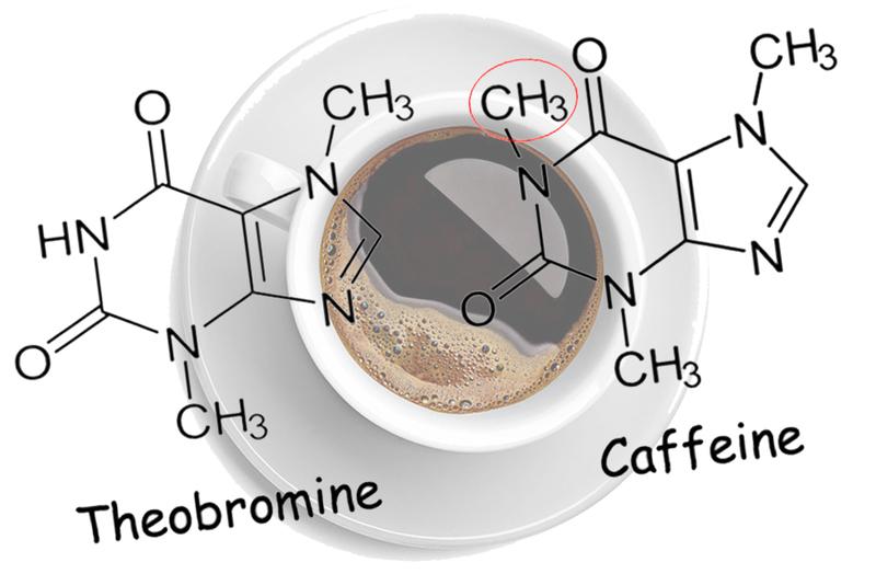 Вот, ЧТО ВАЖНО ВСЕМ знать о кофе