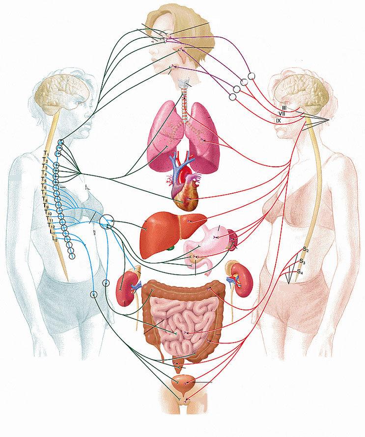 Менопауза: натуральные средства, снимающие симптомы