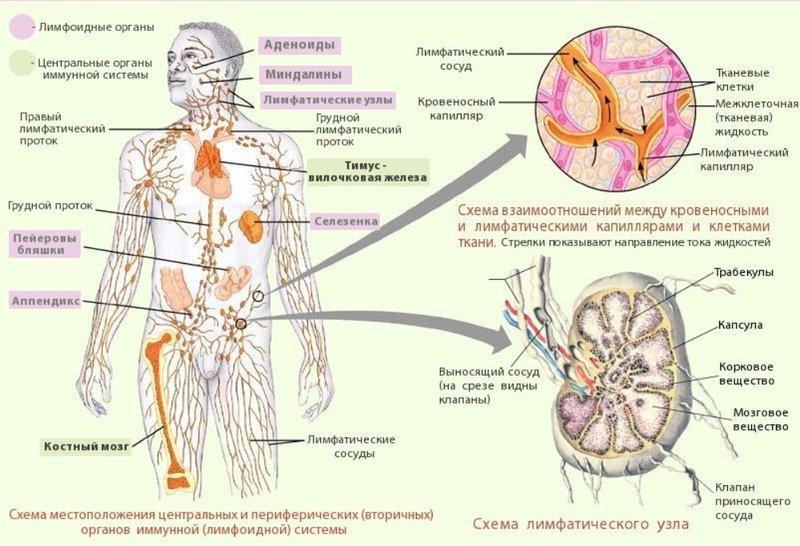 1 простое упражнение для улучшения работы лимфатической системы