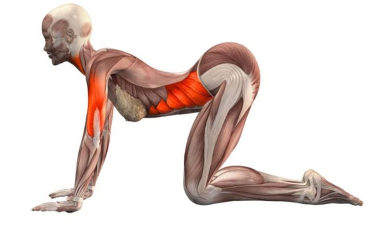 Здоровая спина: Лучшие упражнения на растяжку
