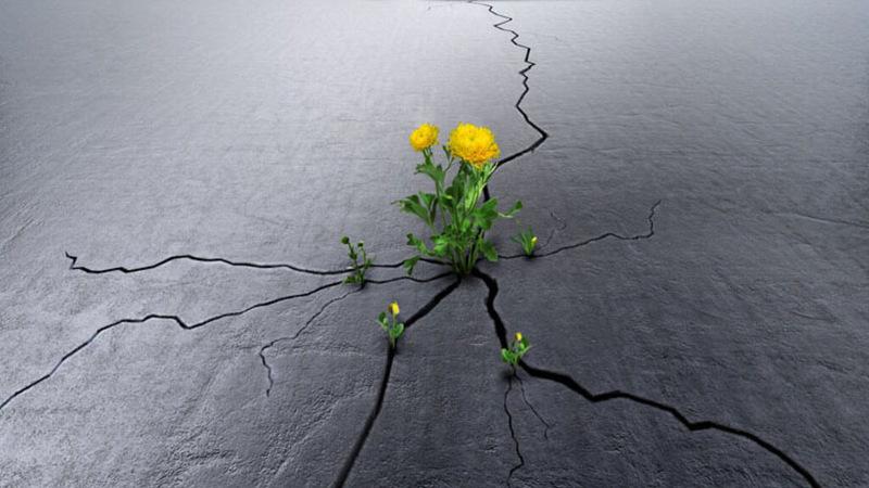 Анна Гавальда: Жизнь всегда оказывается сильней тебя