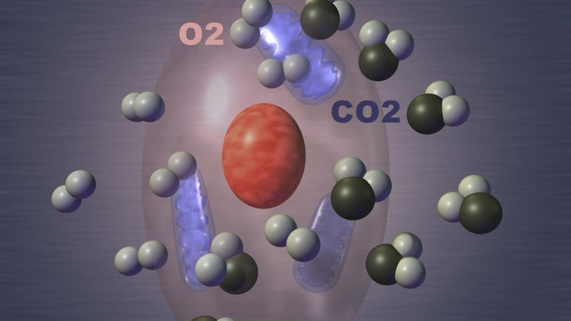 Химик Отто Варбург: Биохимическая теория рака