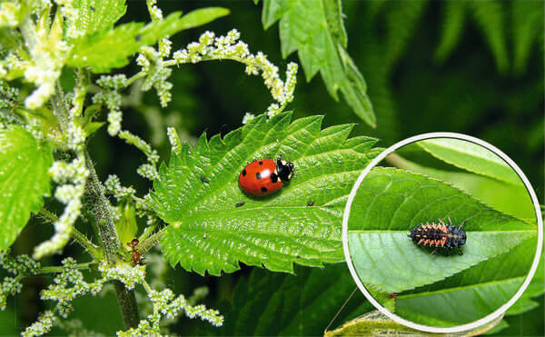 10 советов по экологическому садоводству