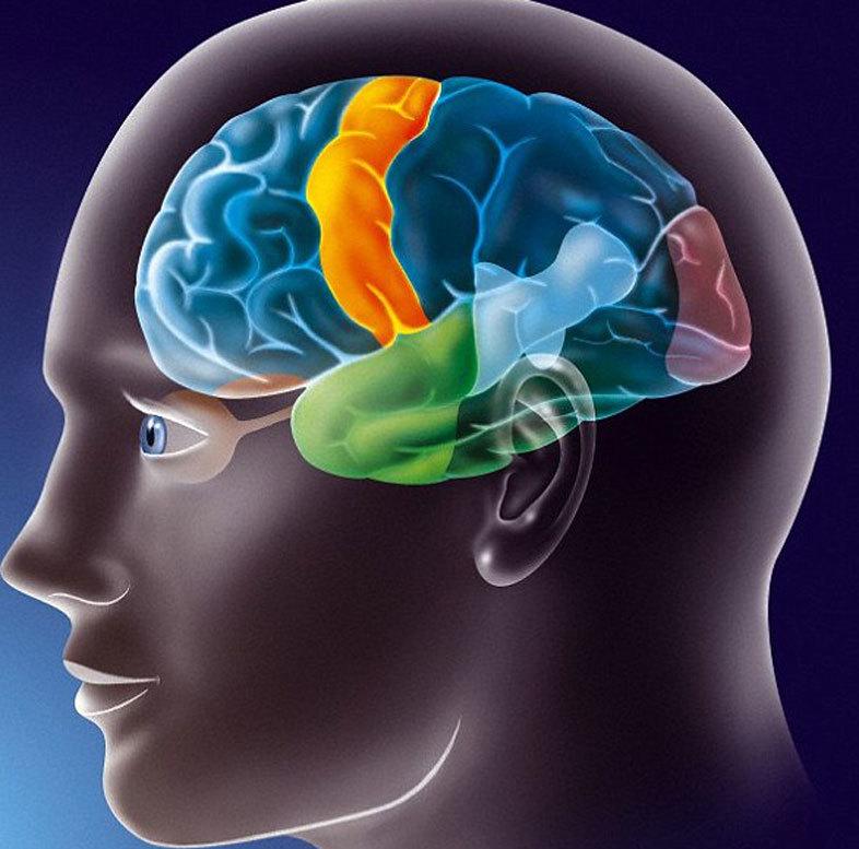 15 ВАЖНЫХ показателей, которые следует ЗНАТЬ, чтобы поддержать здоровыми мозг и тело