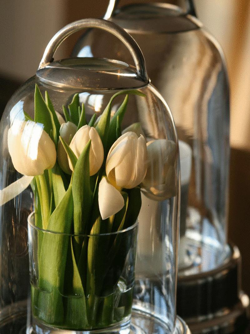 Выгонка цветов