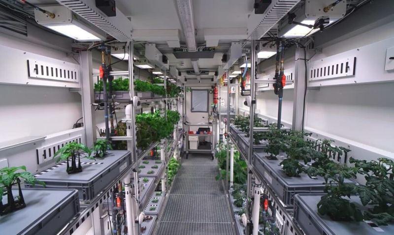 Теплица в Антарктиде получила свой первый урожай