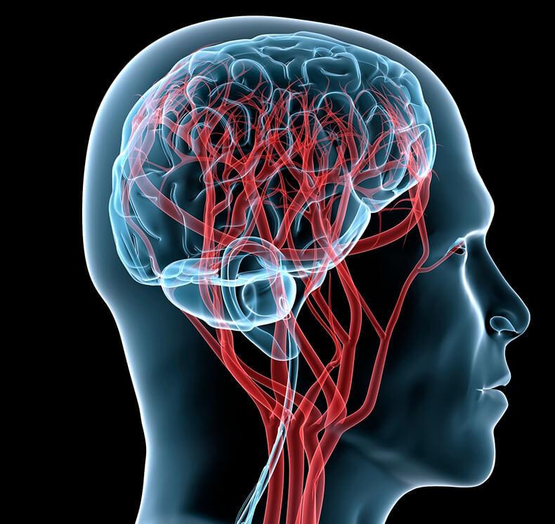 Эффективное обучение детей с точки зрения устройства мозга