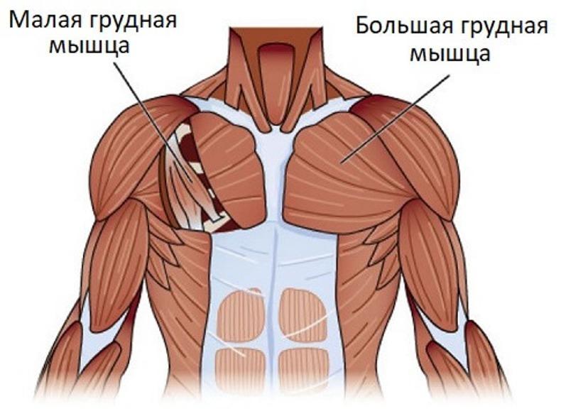 Упражнения на растяжение грудных мышц