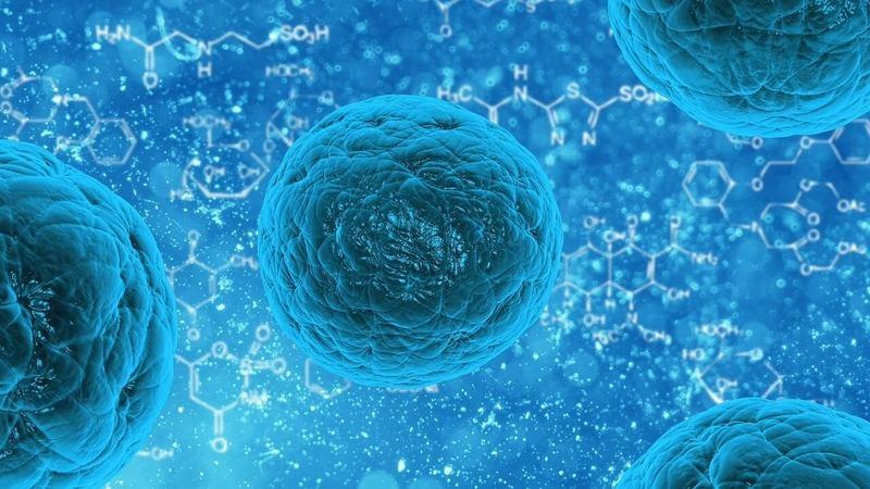 СЕКРЕТ ВЕЧНОЙ ЖИЗНИ точно скрывается в наших клетках