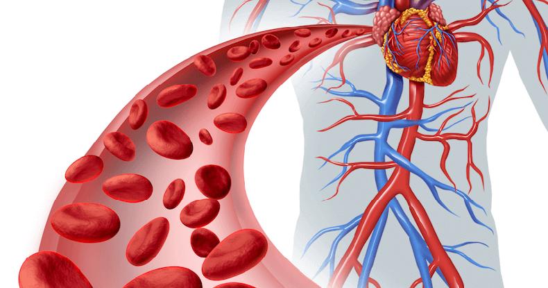 7 рецептов для хорошего кровообращения