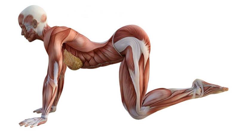 8 упражнений, которые снимают нагрузку с позвоночника