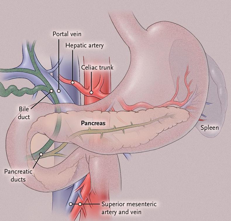 симптом тужилина при панкреатите фото