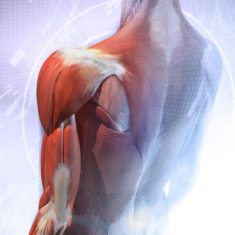 Омолаживающие упражнения для всего организма