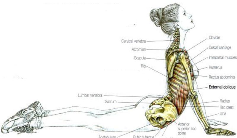 упражнения при артритах по бубновскому