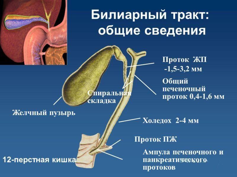 Желчный пузырь: Первые симптомы заболевания