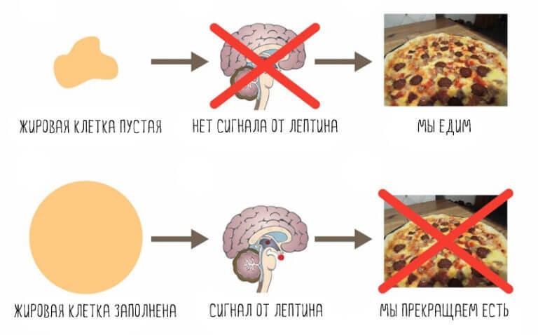 Похудение и «убитый метаболизм»: Фитнес-мифы