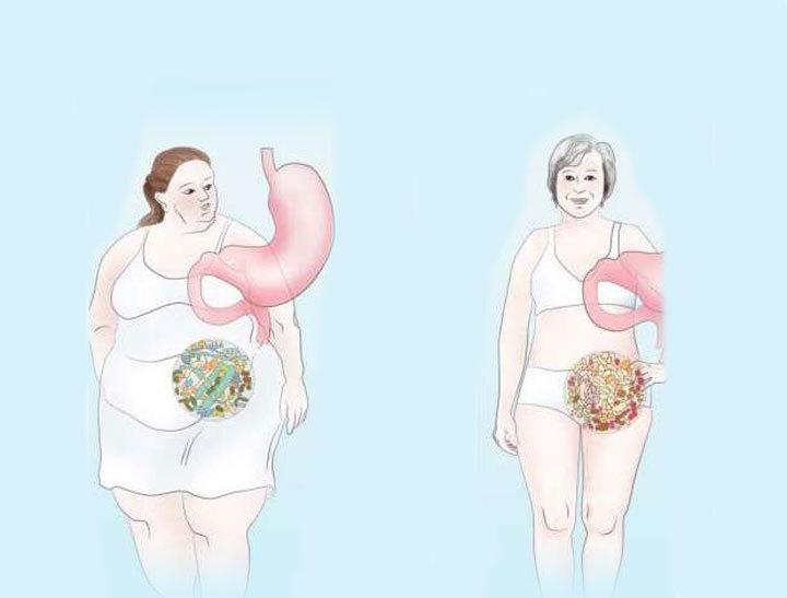 Желудок представляет собой эластичный мешок, который растягивается, вмещая в себя большое количество еды.