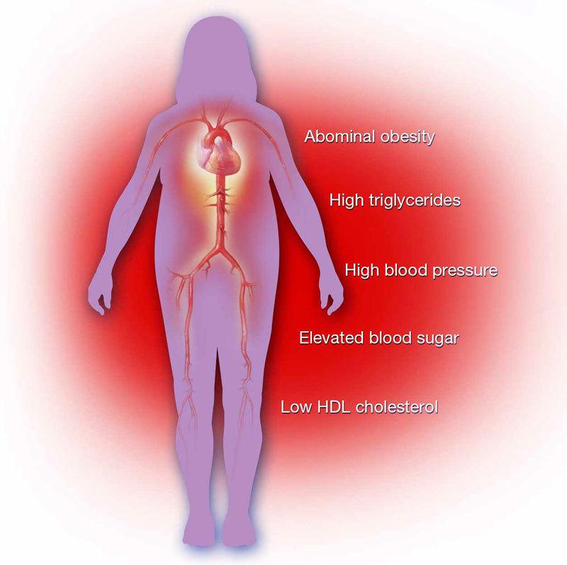 Метаболическая диета: 3 этапа гормонального похудения