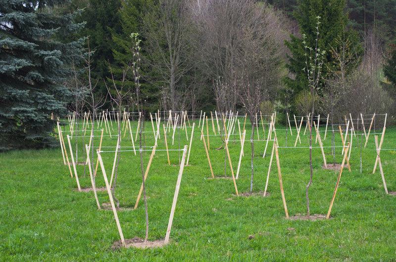 5 главных правил осенней посадки деревьев и кустарников