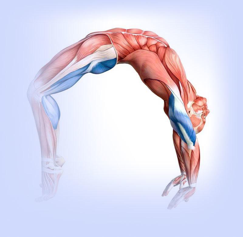 гимнастика для растяжения мышц всего тела