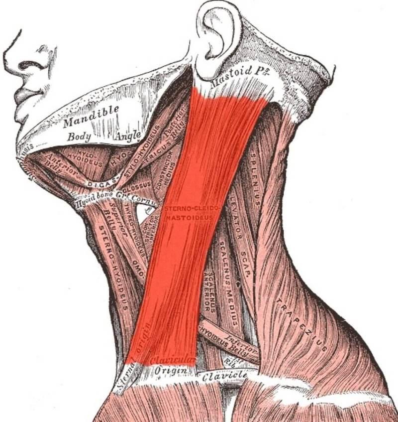 Упражнение для растяжения боковых мышц шеи