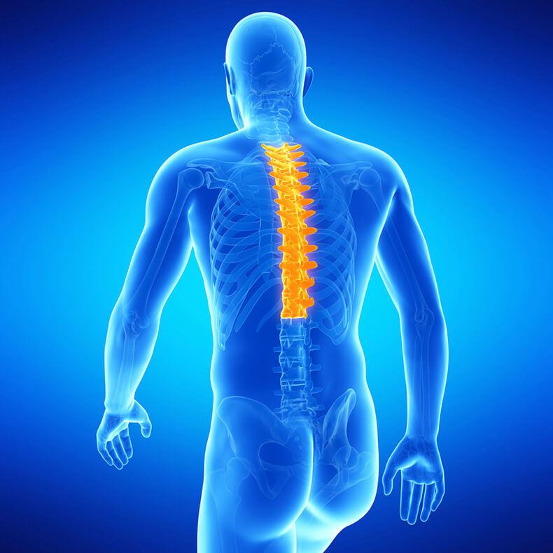 Грудной остеохондроз: Упражнения для гибкостии подвижности