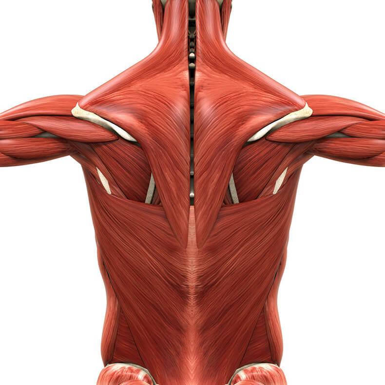 Упражнения с полотенцем: избавят от боли в спине и подтянут грудь