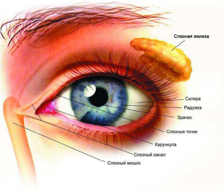 Бляшки на коже вокруг глаз thumbnail