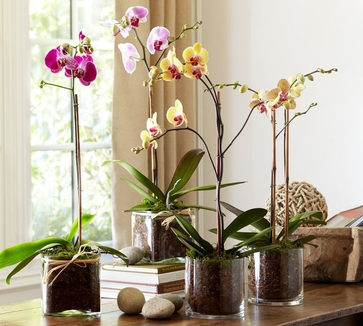 Как «заставить» зацвести орхидею