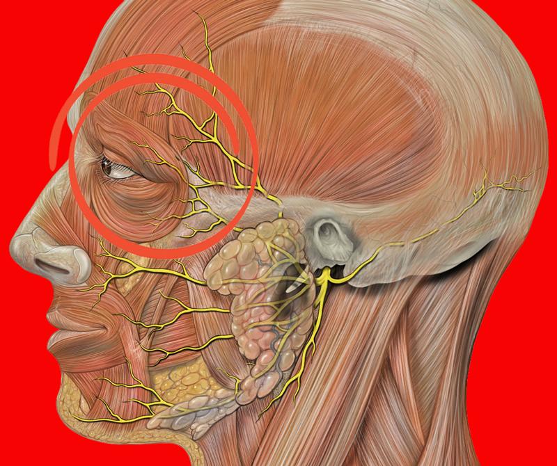 Болит голова и давит на глаза причины и лечение thumbnail