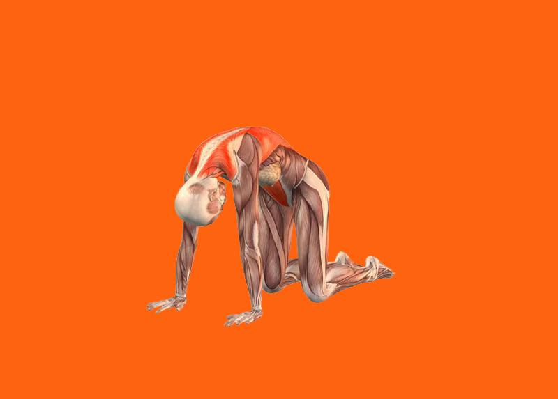 «Кошачье потягивание»: Омолаживающий комплекс соматичекских упражнений