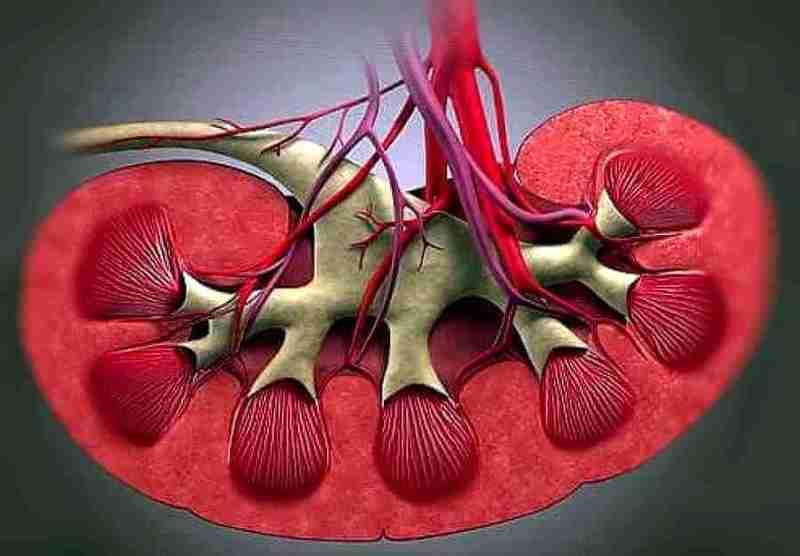 Почечная гипертония причины симптомы лечение