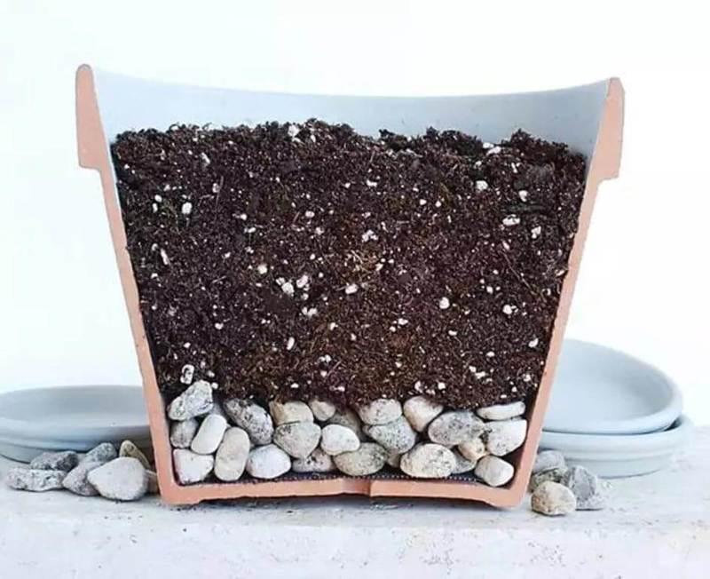 Какую зелень можно выращивать круглый год на подоконнике?