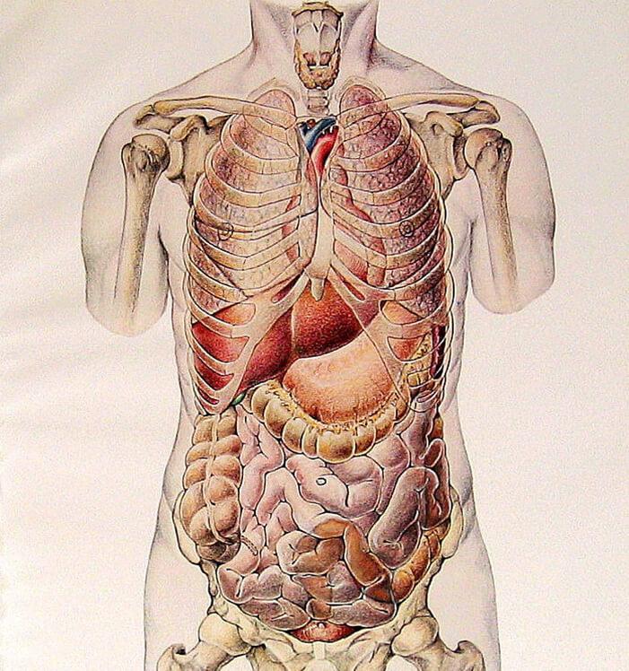 Очищение для селезенки и поджелудочной железы с помощью натуральных средств
