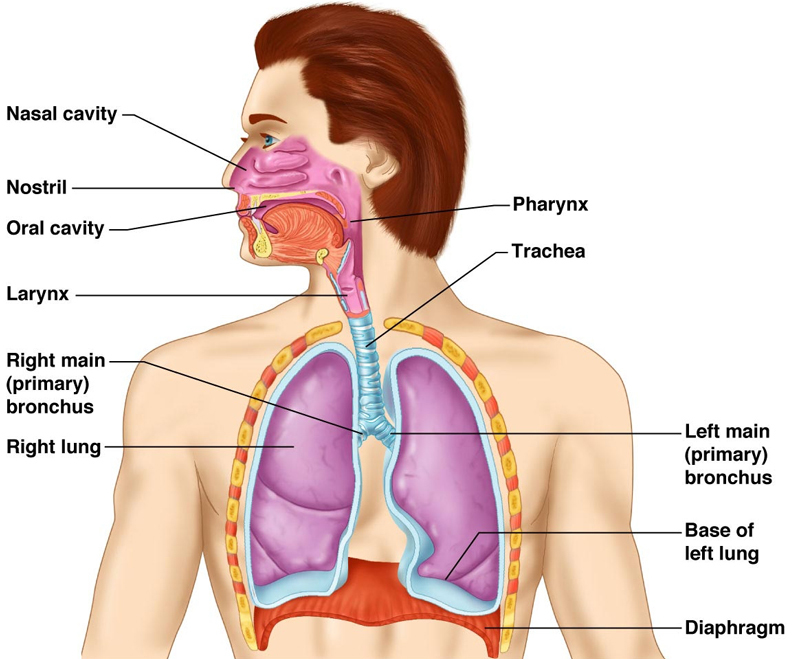 ГОРЕЧЬ во рту: Узнайте какие болезни вызывают горький привкус
