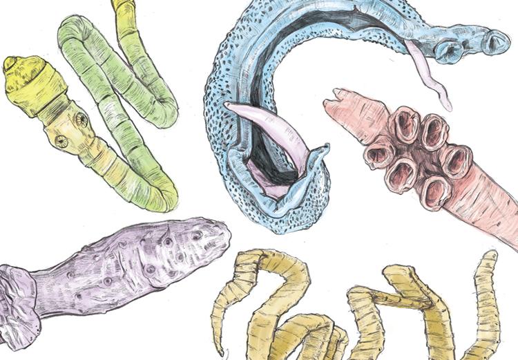 6 симптомов наличия паразитов кишечнике