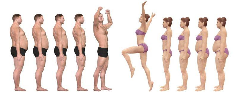 Базовый обмен веществ и вес вашего тела: Что нужно знать