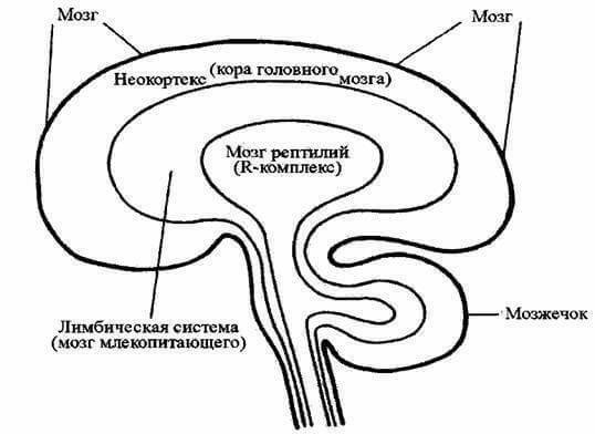 3 системы мозга: Почему мы именно так, а не иначе себя ведем