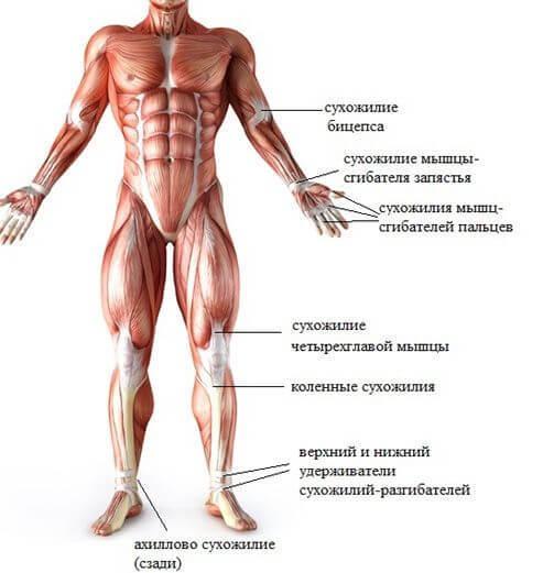 9 статических упражнений для ног, ягодиц и бедер: Похудение и укрепление связок и мышц