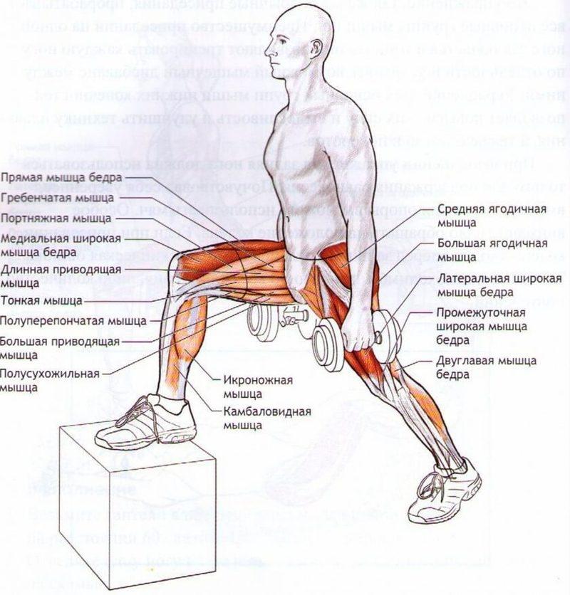 этом упражнения для мышц ног в картинках экспонатом