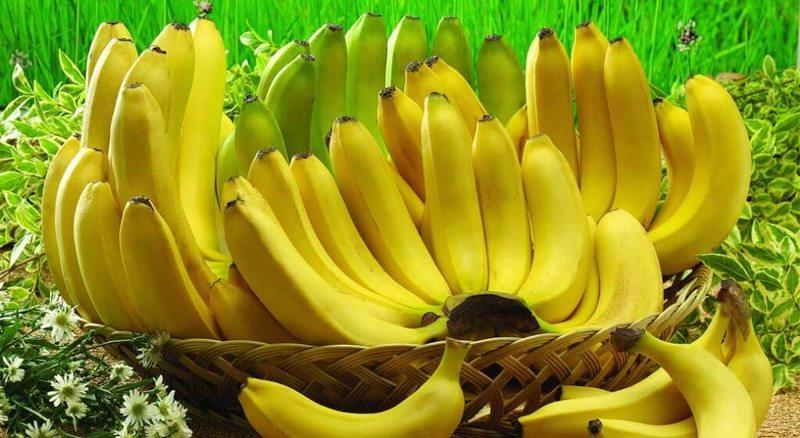 Зеленый банан, или Не забудь покормить микробиоту