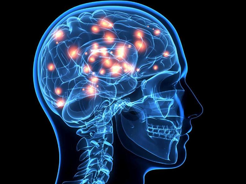 Эмоциональный мозг: КАК мы принимаем решения