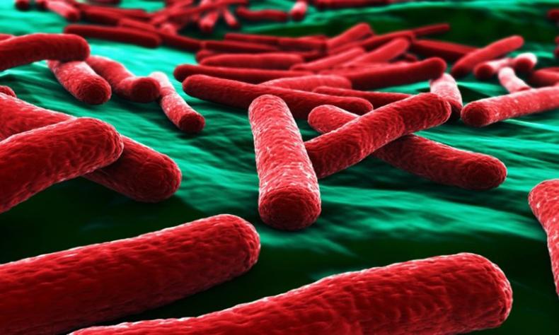«Война» кишечной микрофлоры: Ответы на 10 вопросов о дисбактериозе