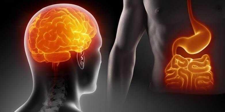Мозг и кишечник: Психические расстройства, вызываемые кишечными бактериями
