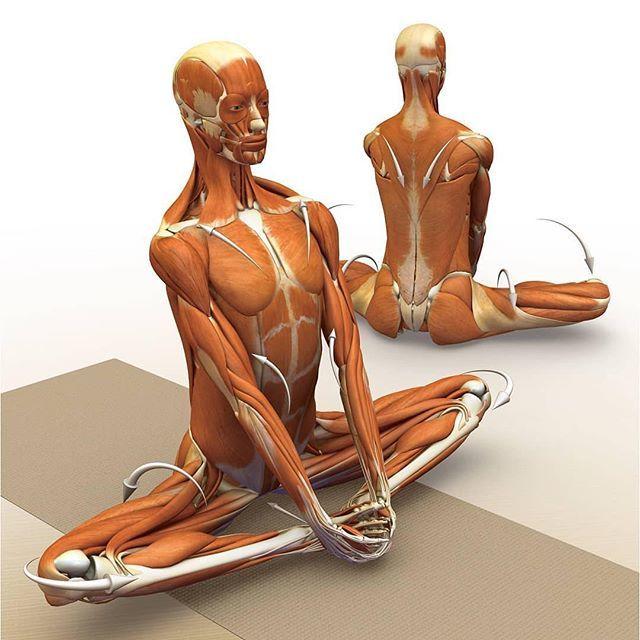 Гимнастика для здоровья сосудов