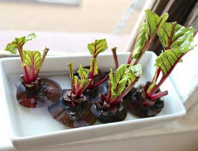 8 овощей, которые можно выращивать снова и снова прямо на кухне