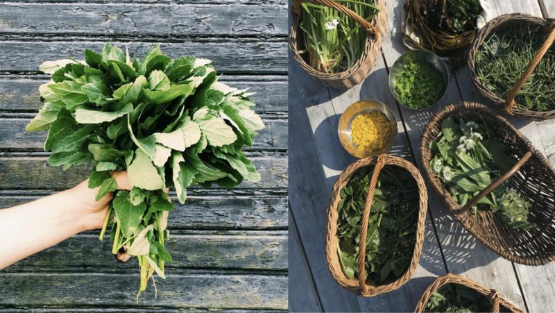 Полезные салаты из дикорастущих съедобных трав: принципы, а не рецепты